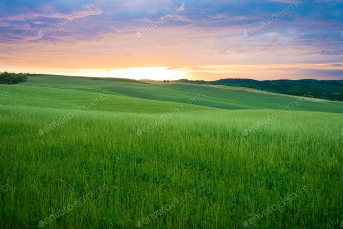 Sunset over the fields of Tuscany