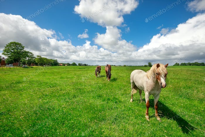 horses on green pasture and blue sky