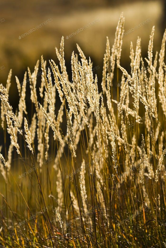 Grass Spikes