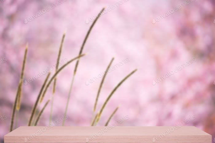 wild himalayan cherry flower defocus background with shelf