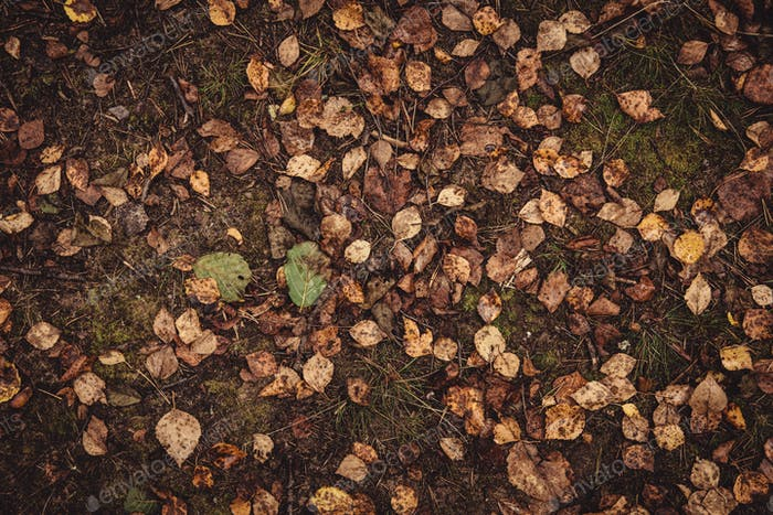 Backround image of fallen autumn leaves