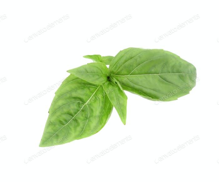 Nahaufnahme von grünem frischem Basilikum.