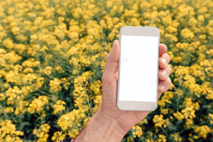 Agronomist mit Smartphone Mock up Bildschirm in Ölsaaten Rapsfeld