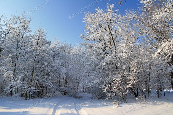 Forest after a snowfall. Beautiful winter landscape. Christmas card