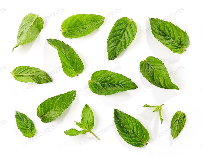 fresh green mint leaves background