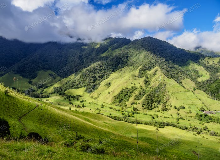 Cocora Valley near Salento in Colombia
