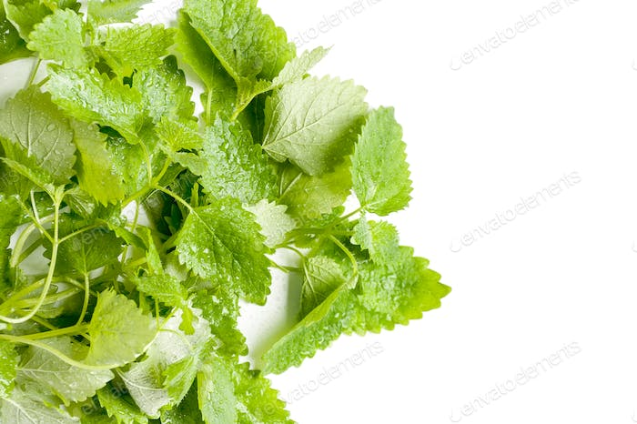 Leaves of fresh mint in splashes of water on a white background.