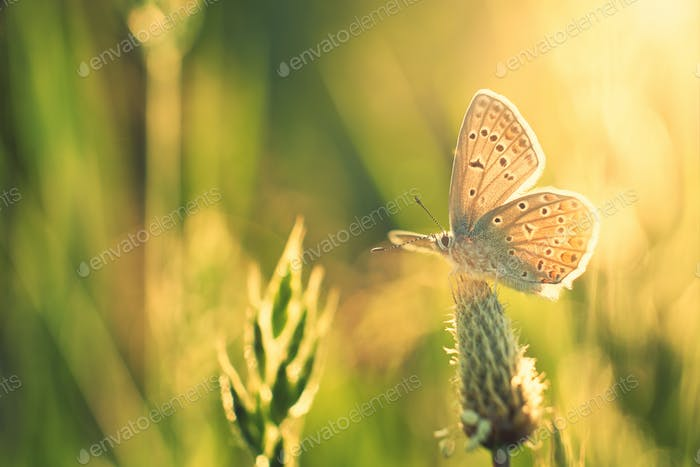 Butterfly on meadow