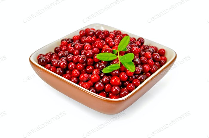 Lingonberry ripe in a bowl