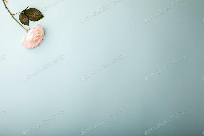 White White Rose.Holiday Day Valentine ,Birthday,Greeting Card,Gift.