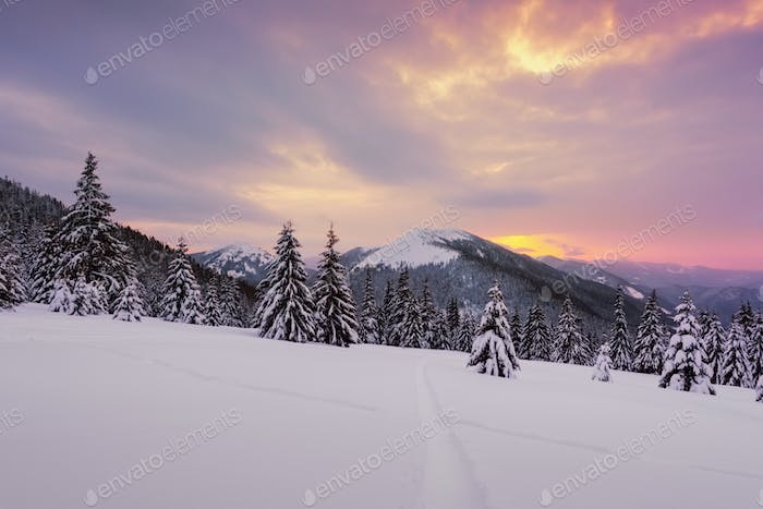 Dramatic wintry scene with snowy trees