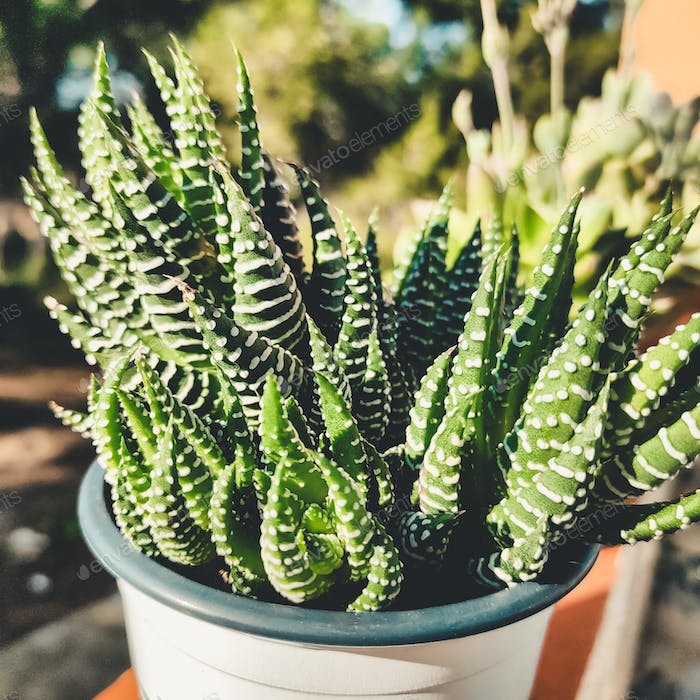 Green and exotic succulent plant