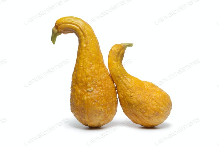 Yellow crookneck squashes