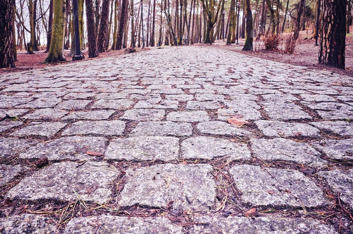 Cobblestone path in a park.
