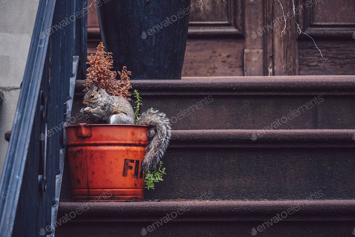 Squirrel on the porch of a house