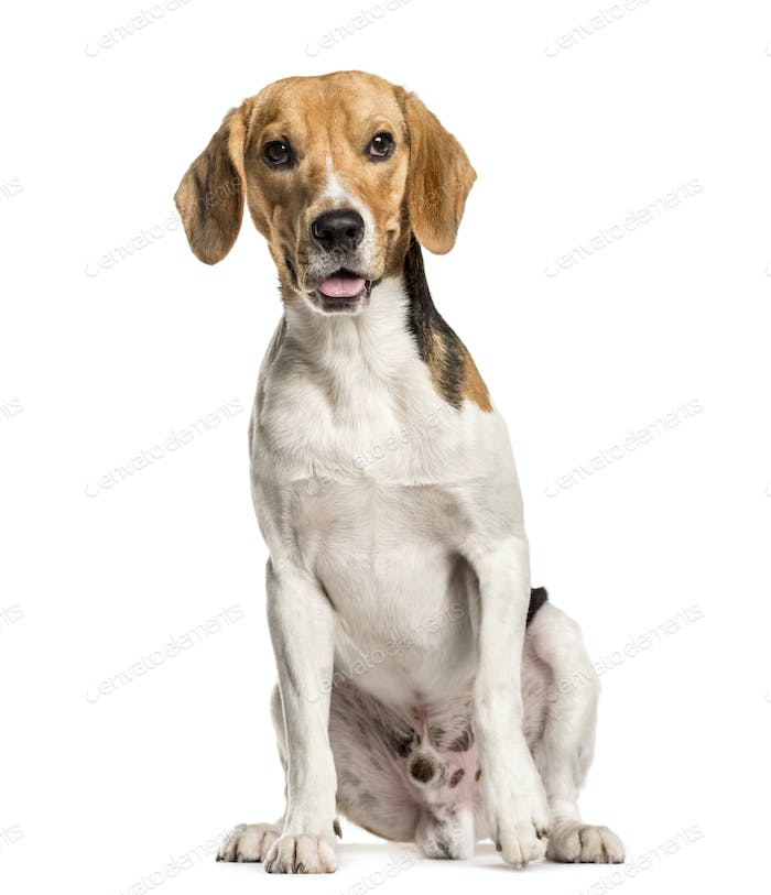 Panting Mixed-breed Dog sitting in front of white background