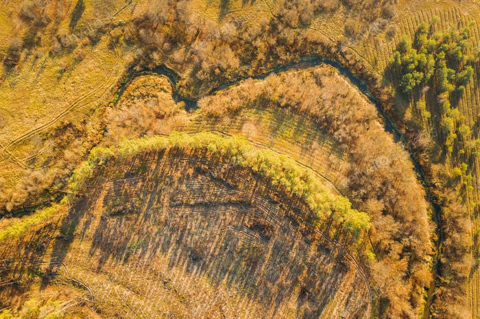 Aerial View Green Forest In Deforestation Area Landscape. Top View Of Shadows From Woods Trunks