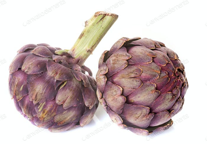 purple artichoke in studio