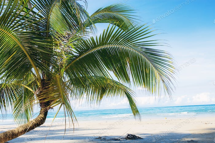 Young coconut tree on beach