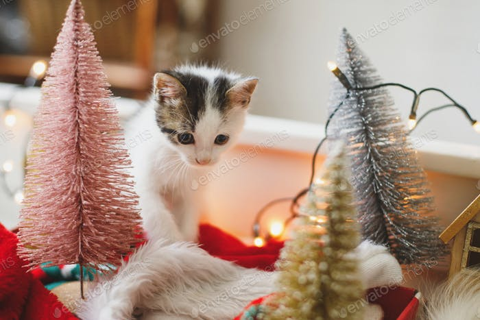 Adorable kitten playing among christmas tree decorations, ornaments and warm lights