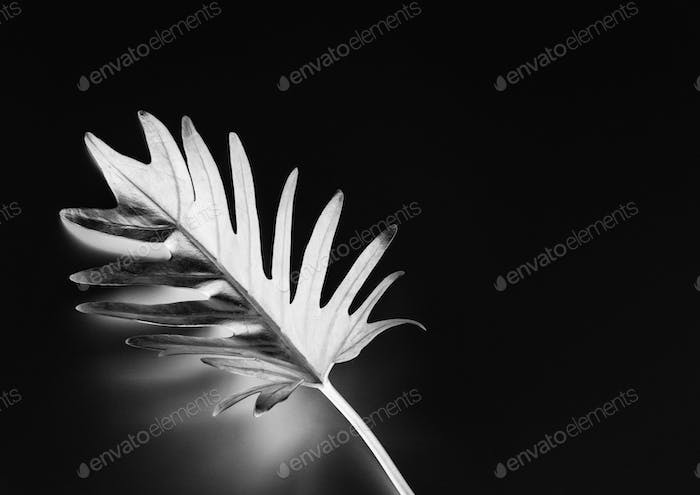 Tropical leaf with negative effect