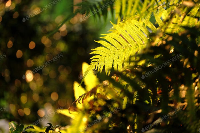 leaf in forest with sunshine