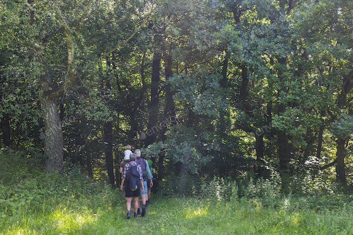 Family walking in forest