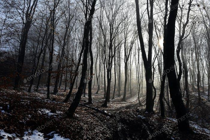 Nebel im Wald. Misty Morgen im Wald
