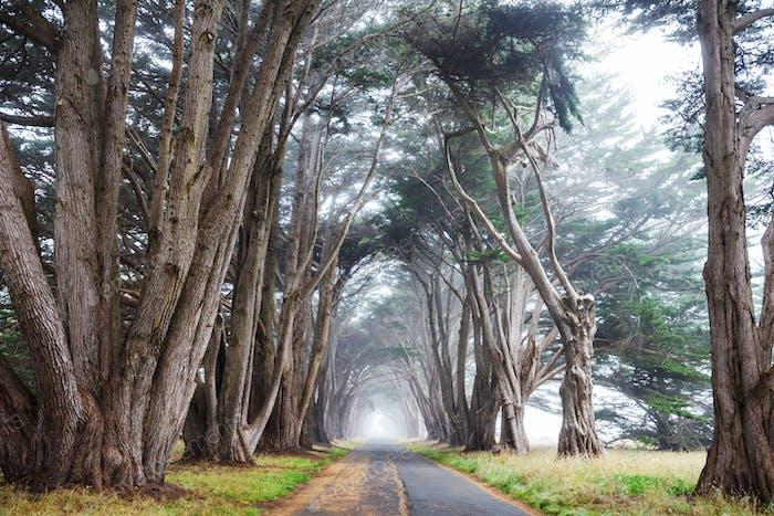 Bäume Gasse