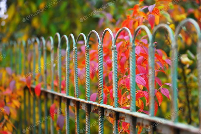 Detail of garden fence with colorful vegetation