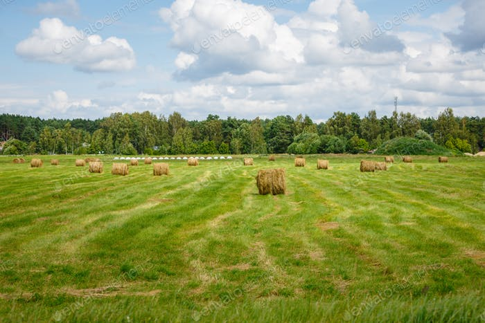 green meadow with hay rolls
