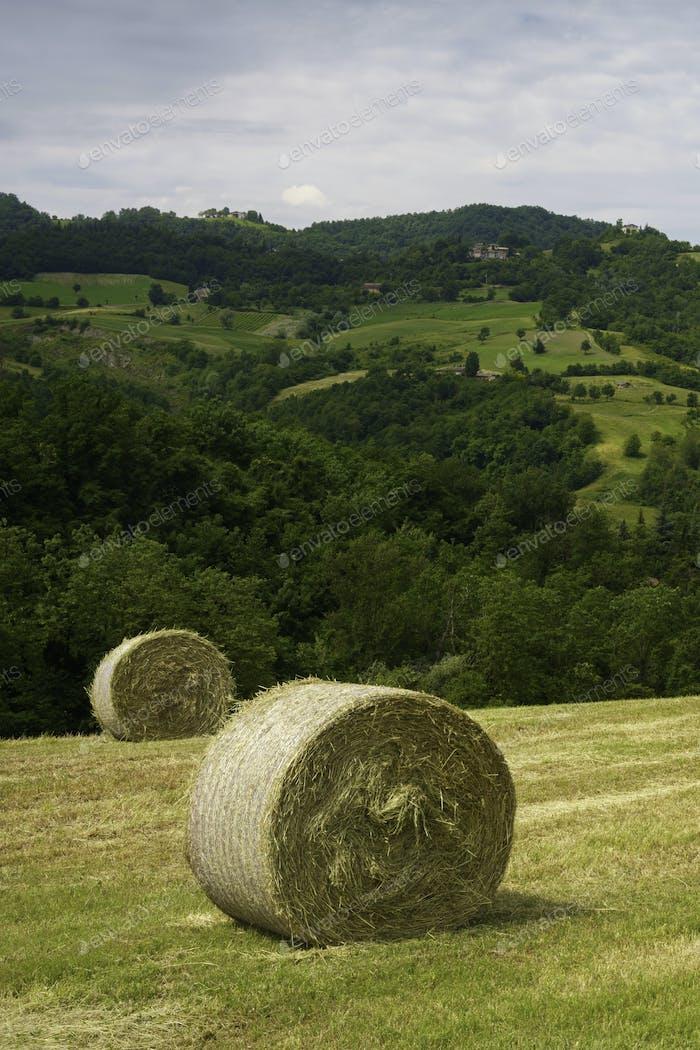 Rural landscape near Riolo and Canossa, Emilia-Romagna.