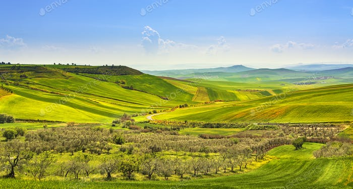 Apulia countryside view olive trees and rolling hills landscape. Poggiorsini, Italy