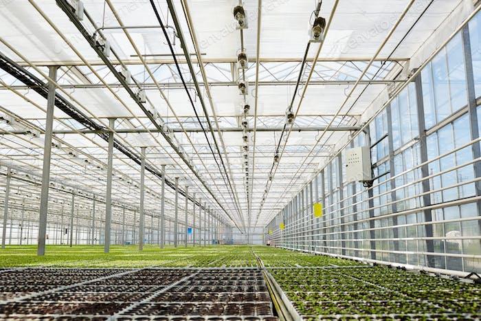 Indoor plantation