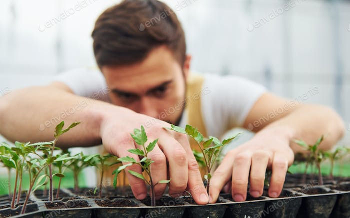 Young greenhouse worker in yellow uniform have job inside of hothouse.
