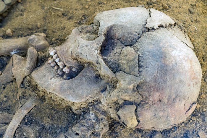 Close up old human skull on ground