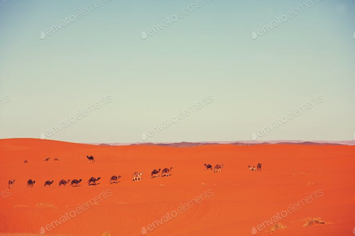 Thumbnail for Caravan in desert