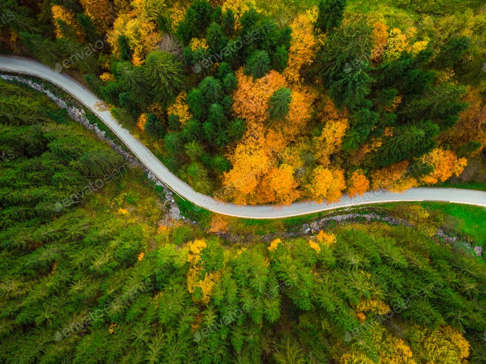 Autumnal foliage  in woodland and winding road, drone aerial vie
