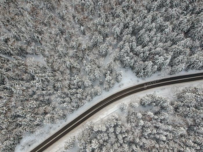 Winterwald mit einer Straße an einem kalten Tag
