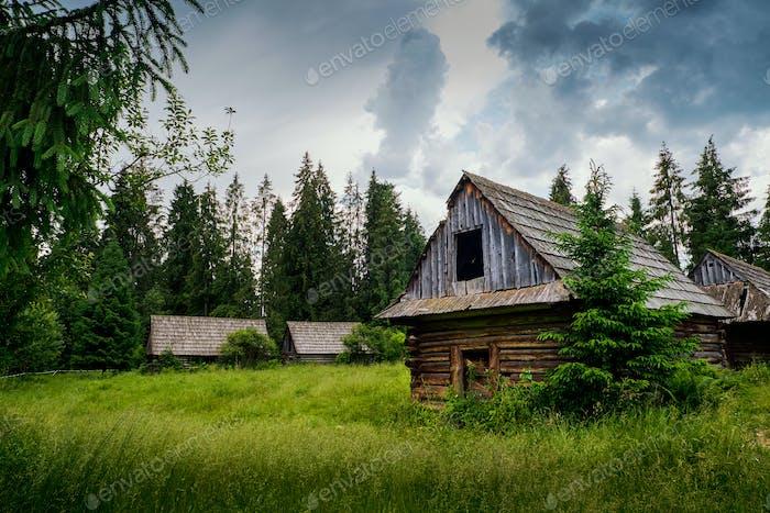 Antigua cabaña de troncos en el Bosque