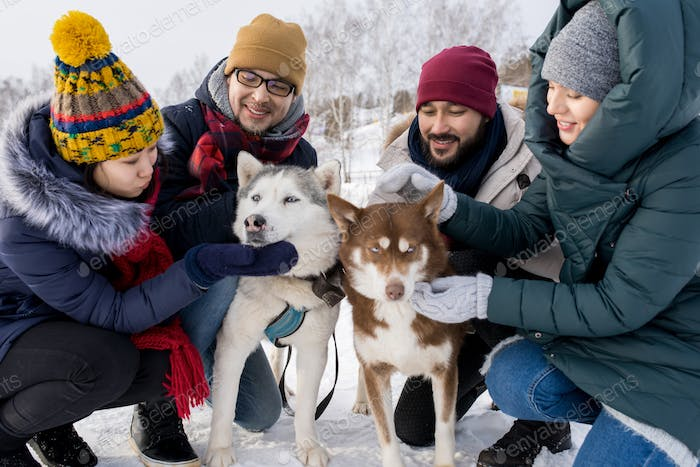 Young Couples Playing with Husky Dogs