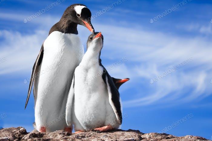 two penguins in Antarctica