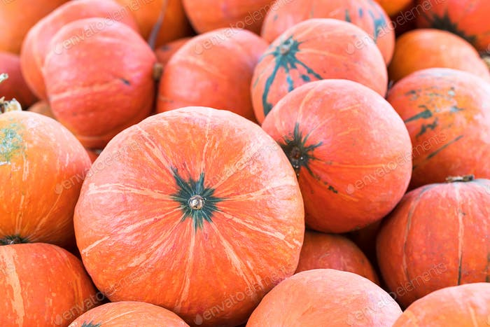 Bunch of orange pumpkins for sale-8