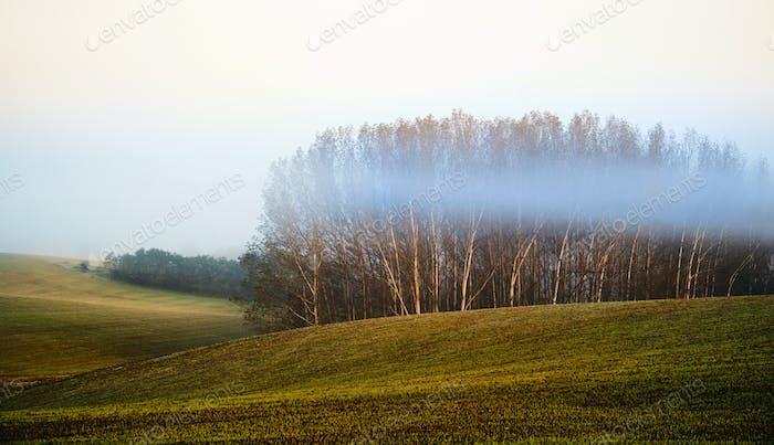 Field in morning lights