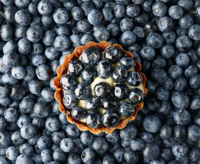 blueberry tart on fresh blueberries background