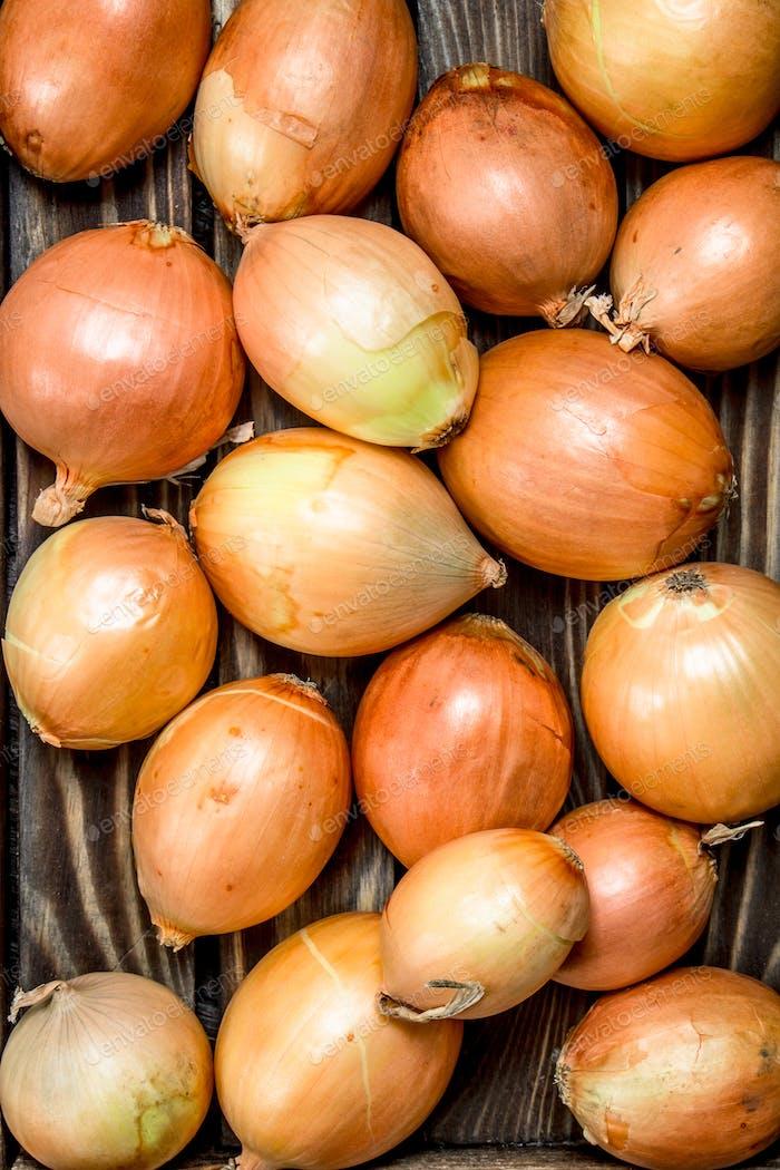 Fresh ripe onions.