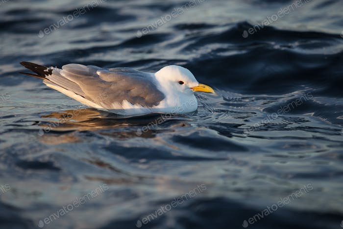 bird on sea water