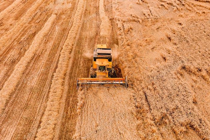 Luftaufnahme der Mähdrescher Landwirtschaftsmaschine, die auf reifem Weizenfeld arbeitet.