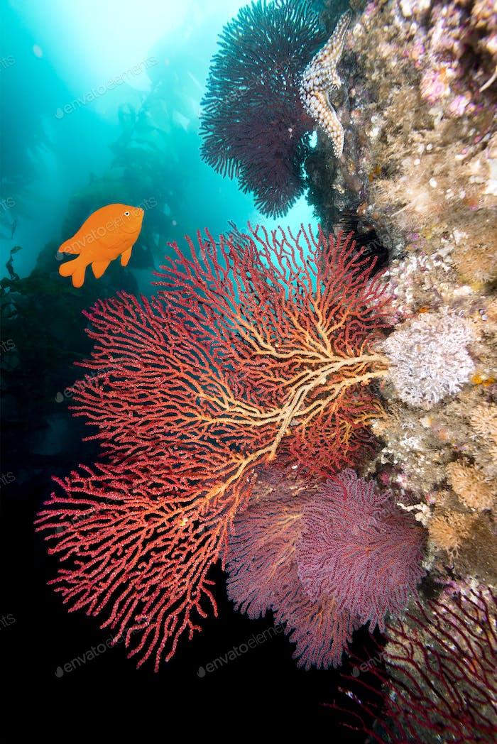 California underwater reef