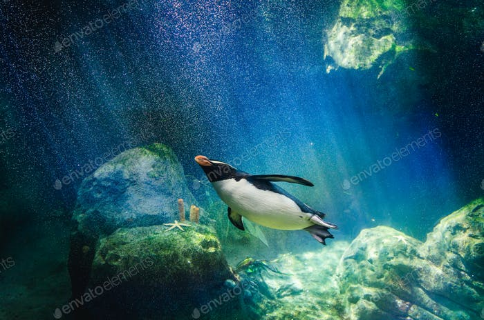 Penguin diving